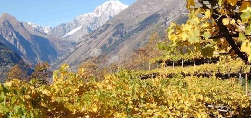 Il Vino Canario stravince nella terra dei vini!