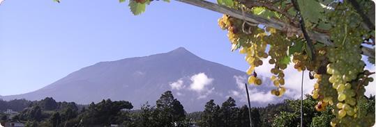I Vini dell'isola di Tenerife – Ycoden Daute Isora