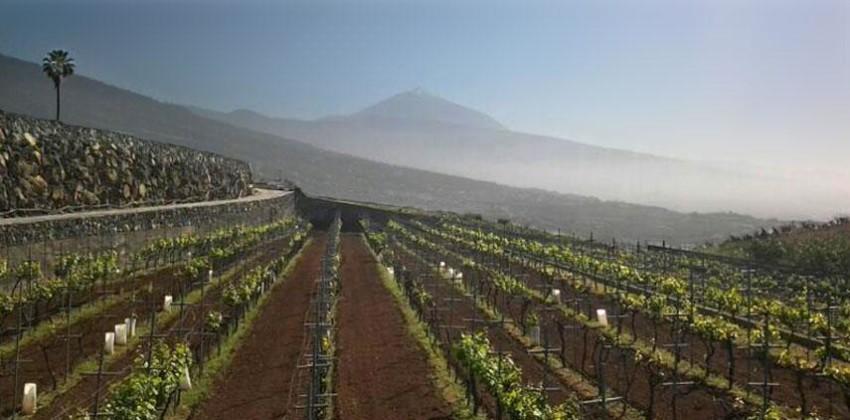 I Vini di Tenerife – D.O. Tacoronte Acentejo